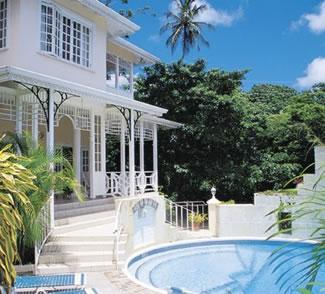 Hawksbill in Tobago